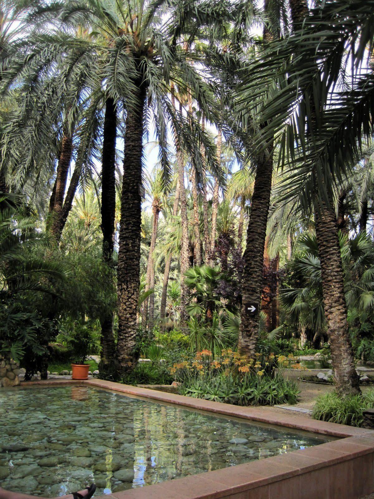 Palms in Elche, Spain