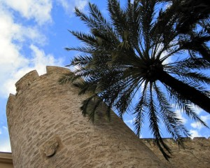 Palm forest in Elche, Spain