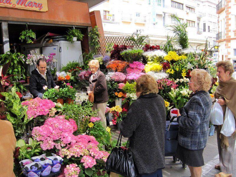 Flowers in Alicante, Spain