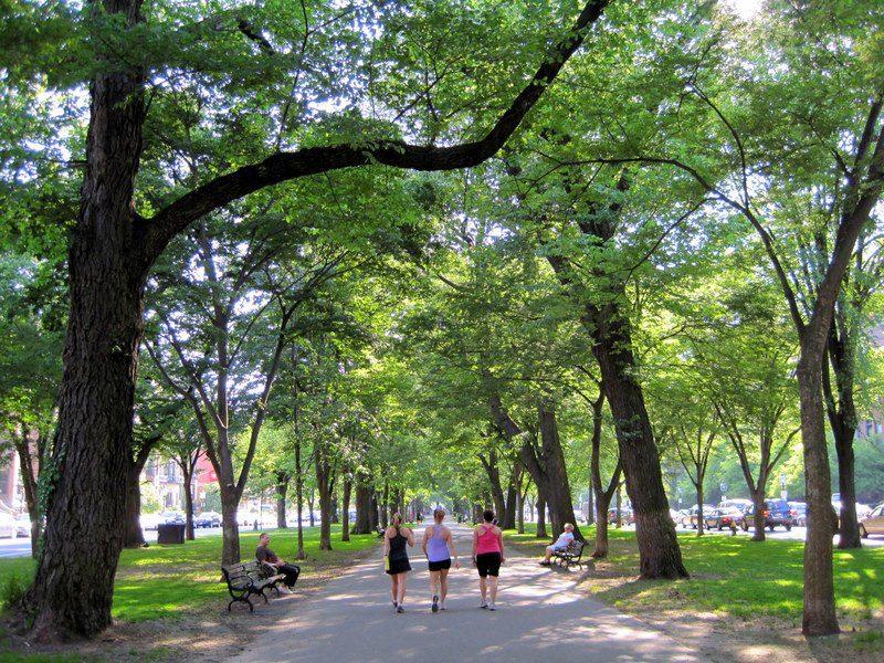 Comm Ave in Boston