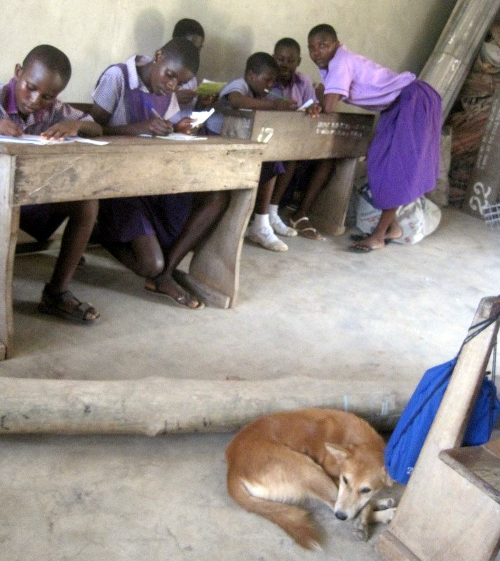 A dog kept us company in the classroom in Ghana.