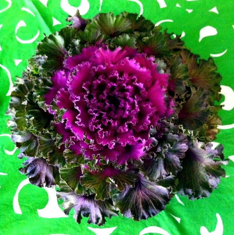 Kale centerpiece