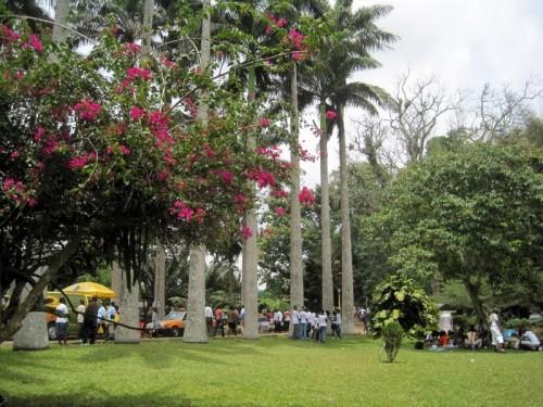 #7: Aburi, Ghana.  A stunning climate and park.