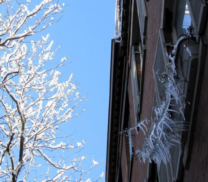 Spiky ice window plant.