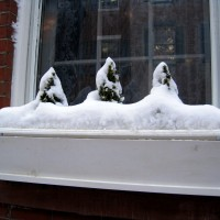 Cute snow-capped triad!
