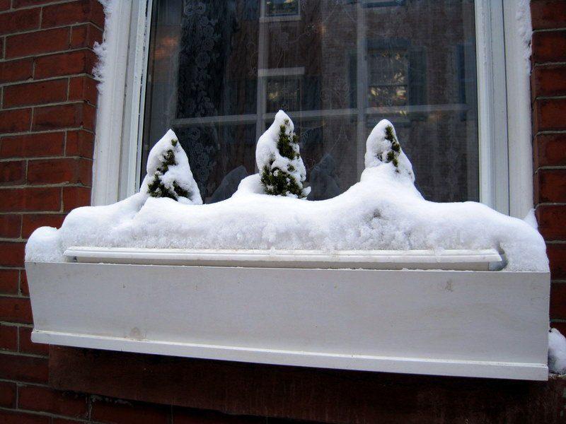 Cute snow-capped triad!
