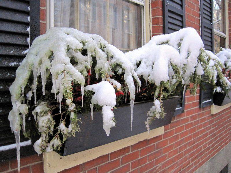 Snow hat plants.