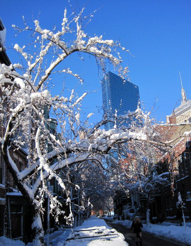 Snow tree hugs Hancock.