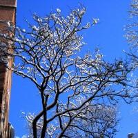 Ice tree!