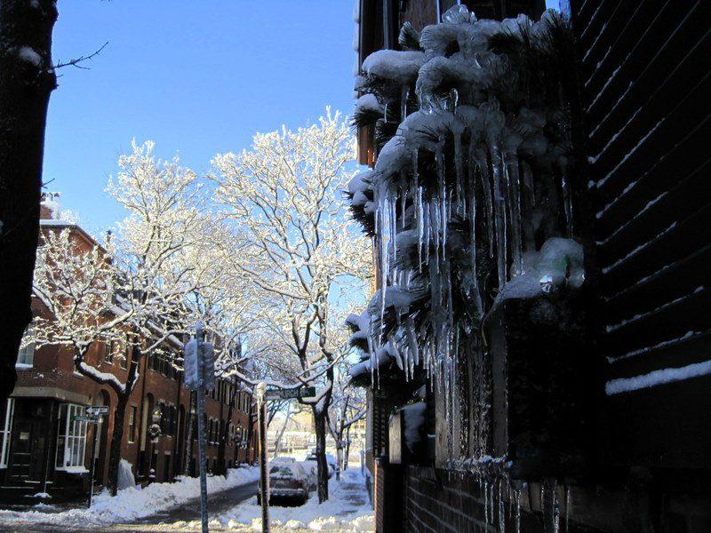Ice waterfalls on plants.
