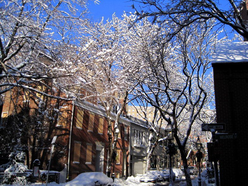 Icy trees in Boston!