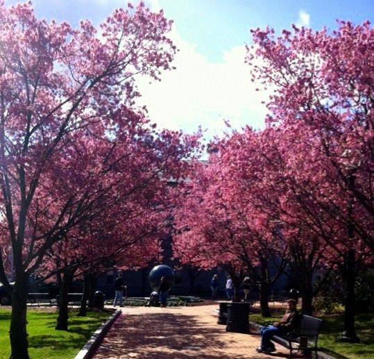 Lovely trees in Quincy, Massachusetts.