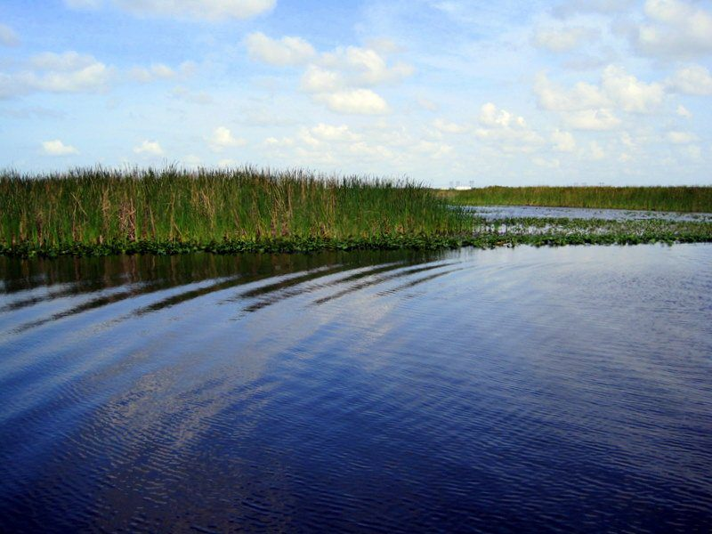The sunlight around 4pm kissed the Everglades.