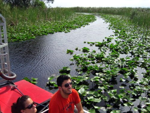 Our airboat cut through the thick, emerald green water plants.