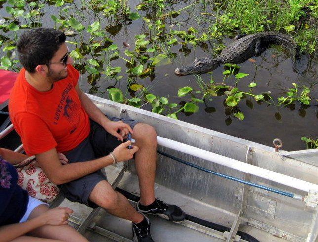 Alligator! Everglades Airboat Tours