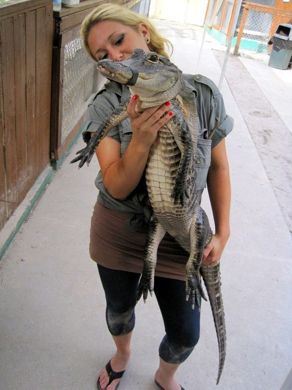 This baby alligator looks like a freaky dinosaur.