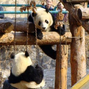 Xiu Na: Surprises at the Beijing Zoo and Summer Palace