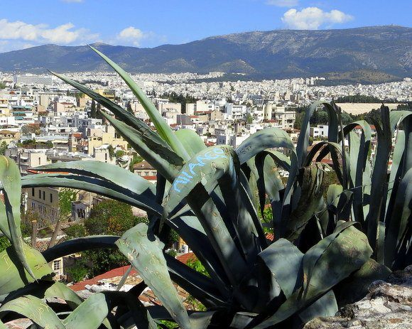 We even saw graffiti ON THE PLANTS going up the Acropolis in Athens!
