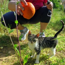 Heavenly Orange Picking With Kittens in Nafplio, Greece