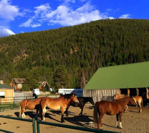 Yesterday: Colorado horses and TBEX. Tomorrow: back to Boston teaching!