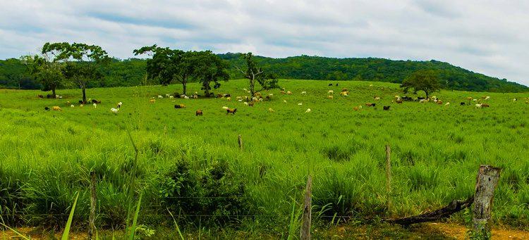 San Ignacio, Belize, near Xunantunich