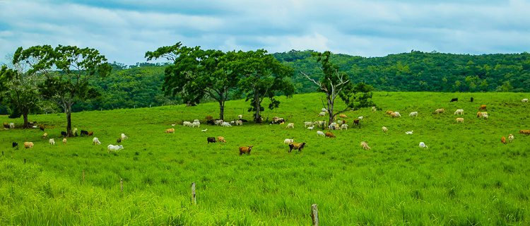 Much of the landscape we drove through in central Belize was lush, green, and delightful like this.