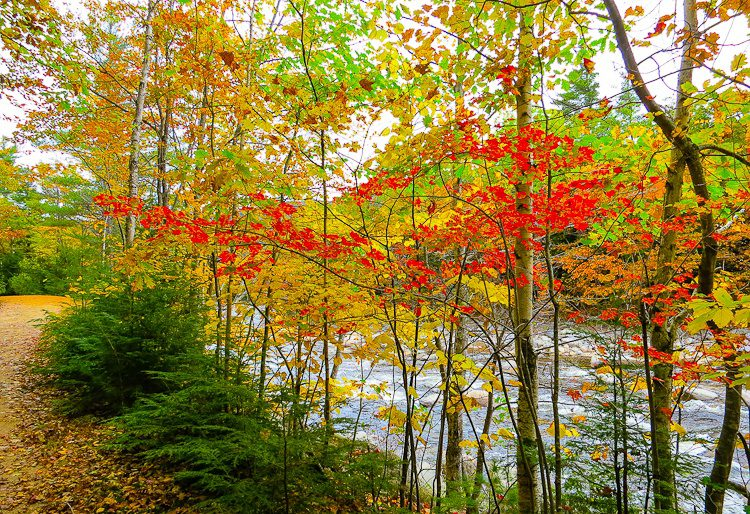 Check out the fiery red and sparkling gold of New England fall!