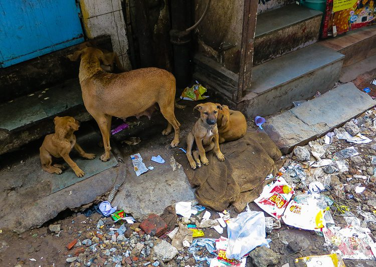 Animals of all types and situations abound in India.