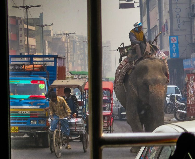 Elephant on the highway!!! Spotted on day 1 in India.
