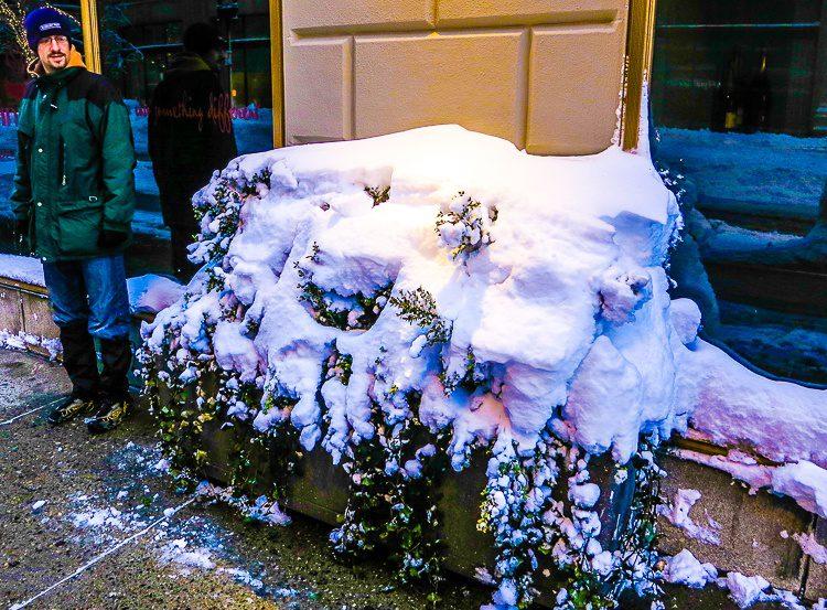 Bush under blizzard snow
