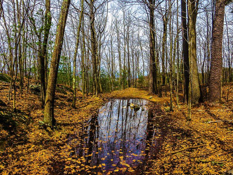 Hiking trails around Brattleboro were a tad damp...