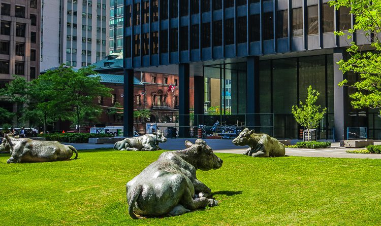 Random cow sculptures grace the lawn outside the towering buildings.