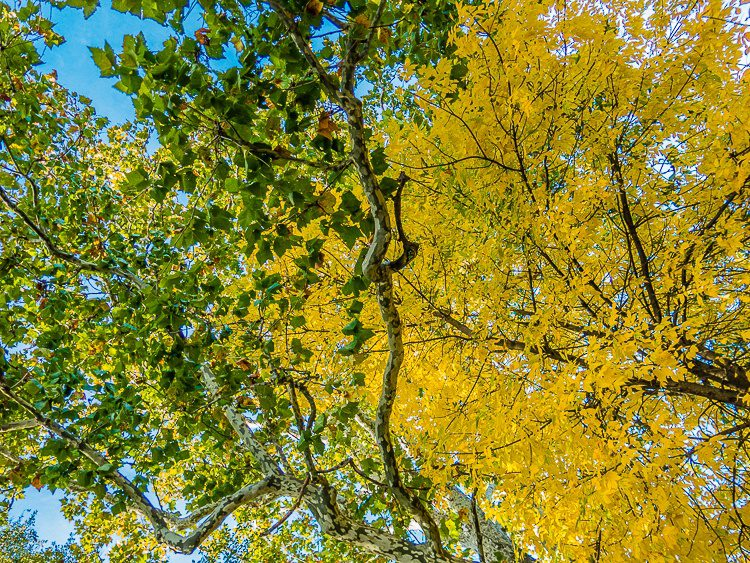 Look up at the glory of Autumn.