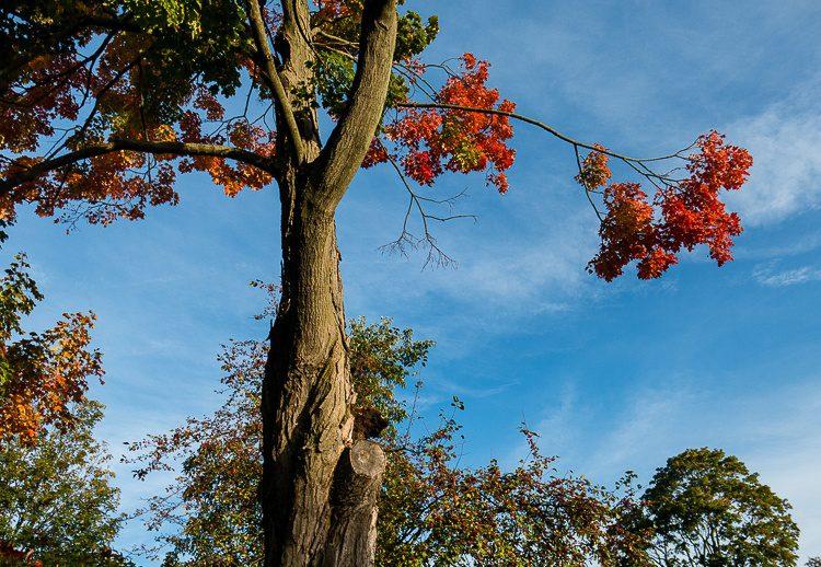 Ka-BOOM! It's Fall in Boston!