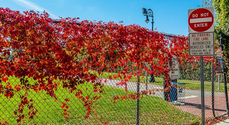 Autumn can make a boring fence and sign look gorgeous.