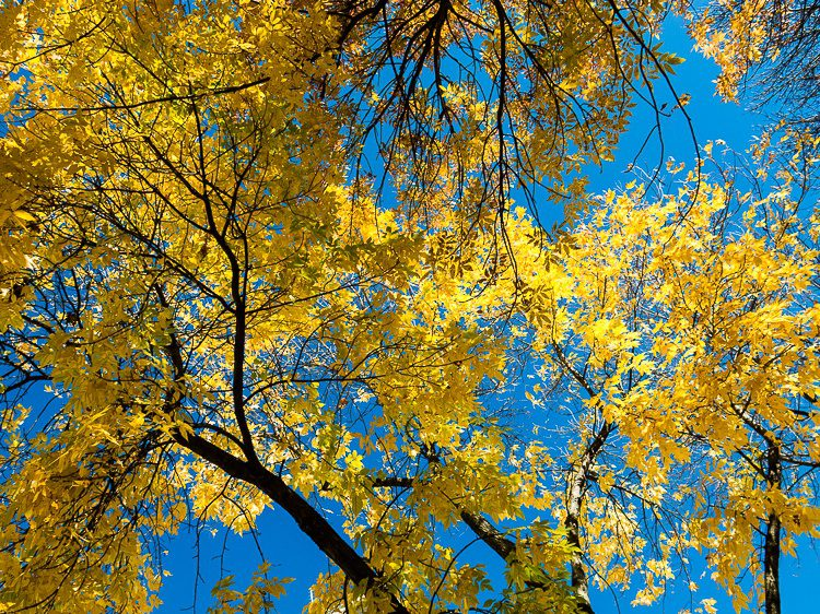 Autumn leaves against the blue sky are my favorite!