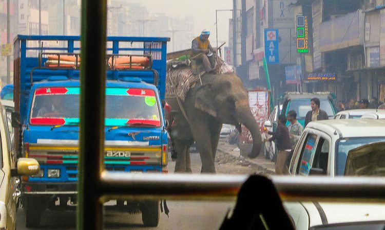 An elephant sharing the road with trucks? In India, sure!