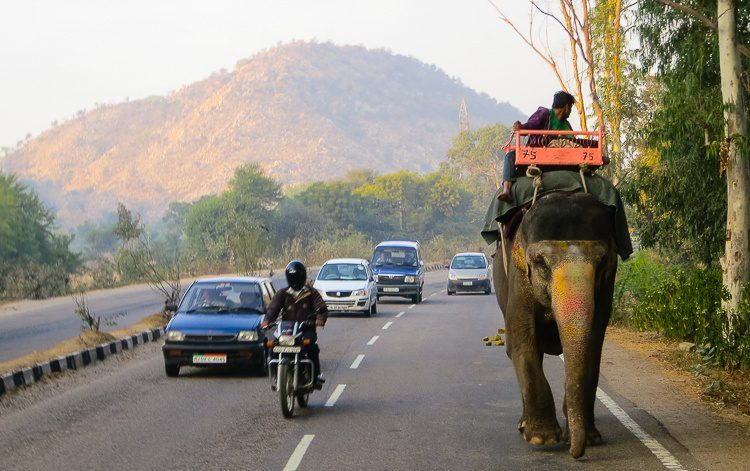Another elephant on the highway.
