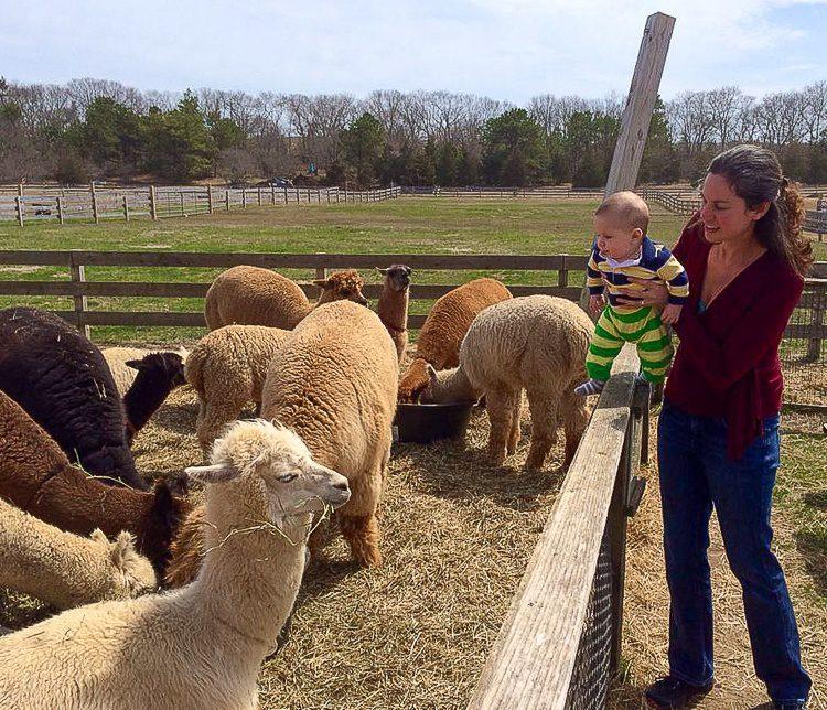 Baby plus alpaca equals hilarity.