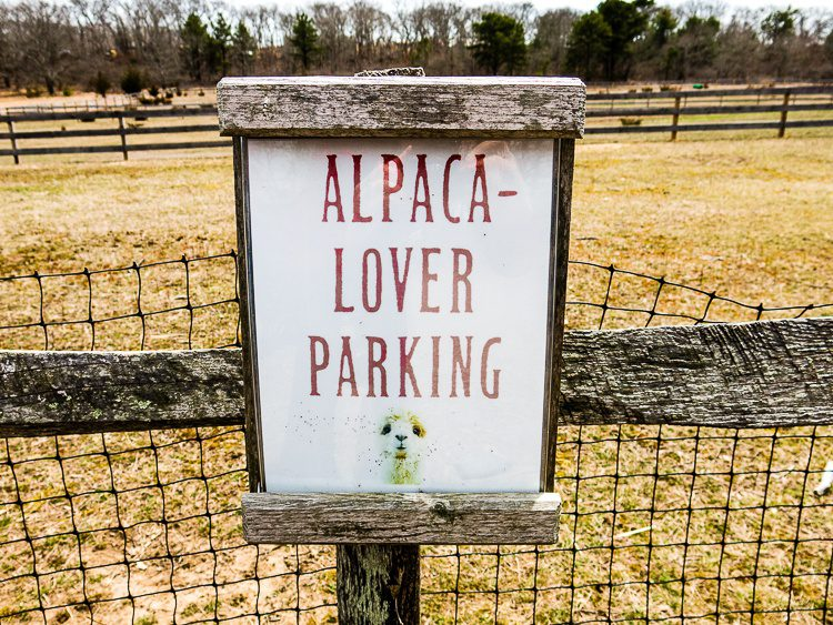 By the end of the visit, we were indeed alpaca lovers.