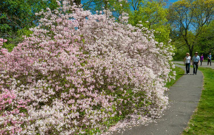 A tidal wave of pink flowers, rushing towards that couple!
