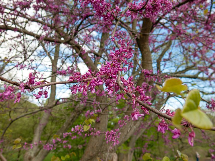 Flowers hugging the branches.