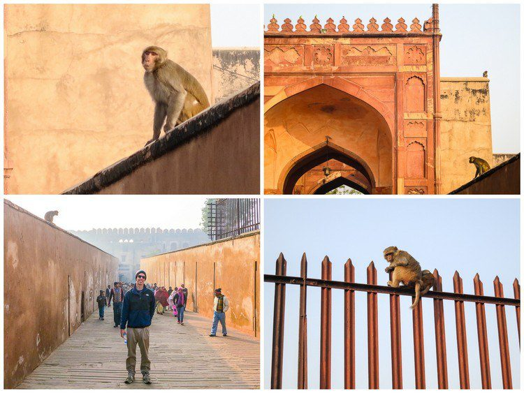 Monkeys were everywhere in the first section of Agra Fort!