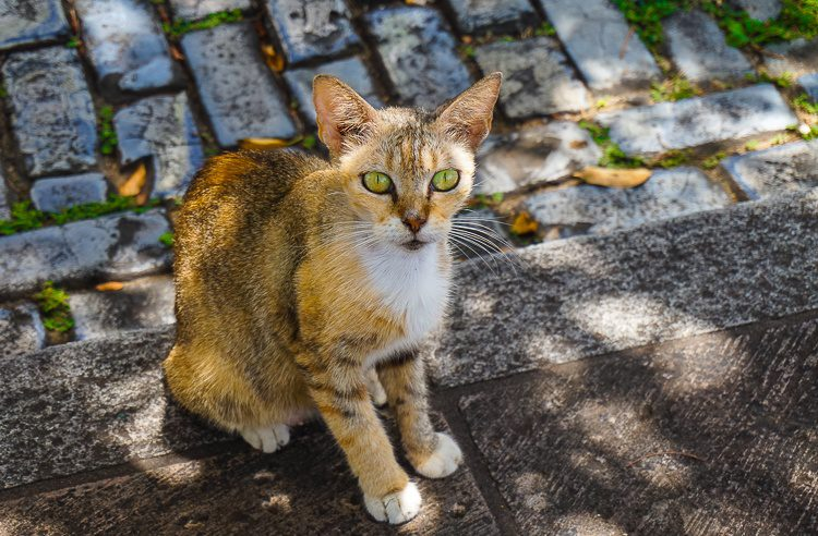 Many cats roam Old San Juan. This was my favorite.