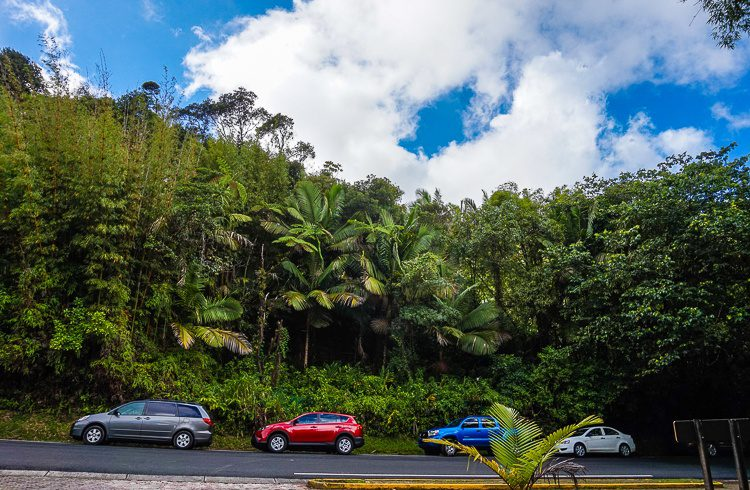 El Yunque rainforest is super accessible by car.