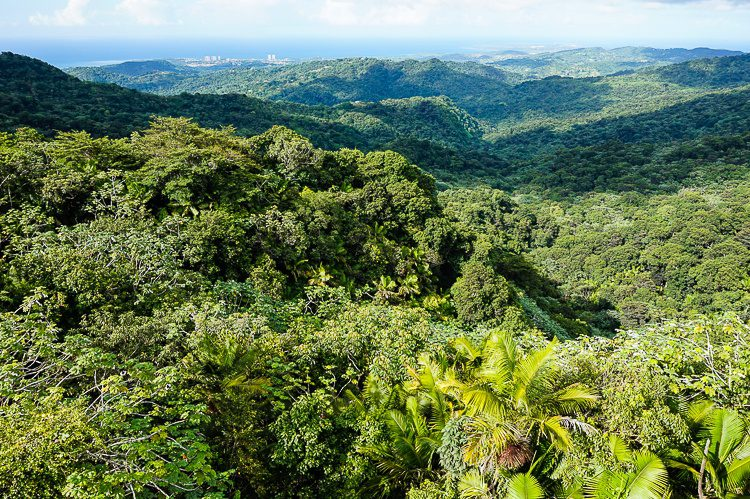 The view from the top of the tower: El Yunque rainforest stretches on and on. Can you see the sea far beyond?