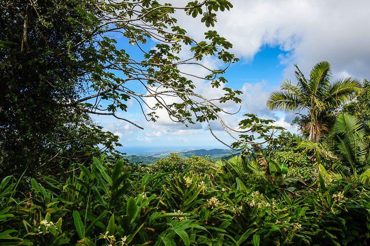 What dangers lurk in El Yunque?