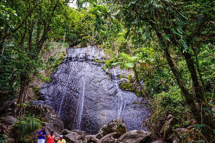 La Coca Falls in El Yunque is just a few feet from the road.