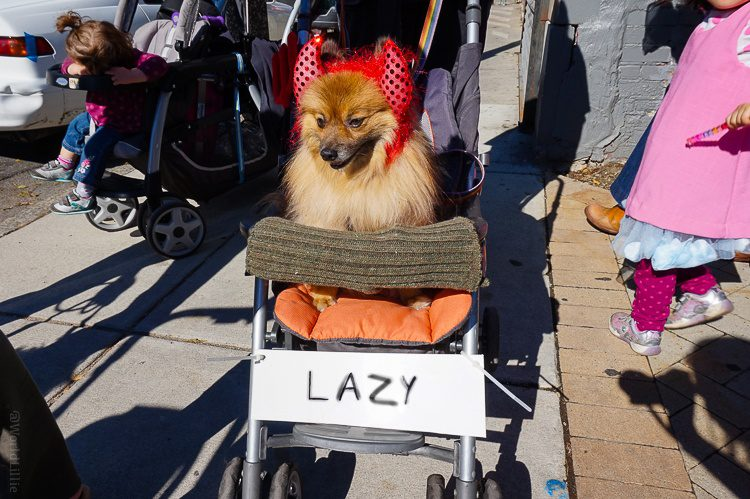 Dog as Lazy Devil. Hilarious.