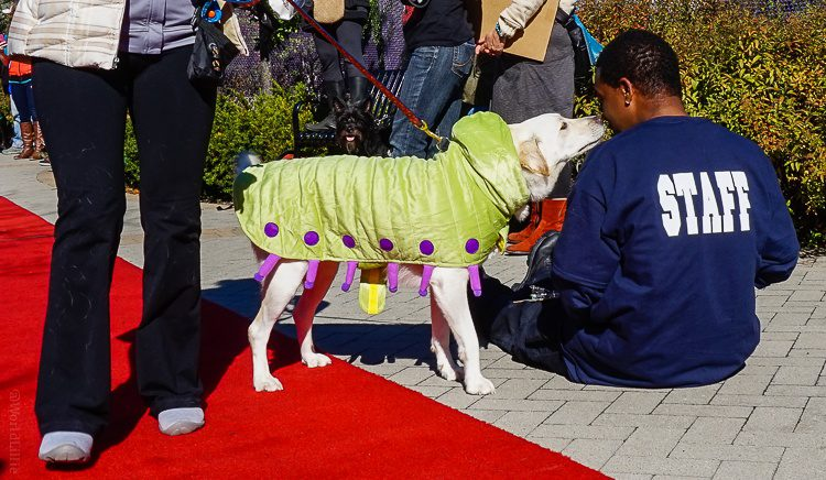 Caterpillar dog, trying to bribe a fashion show staff member.